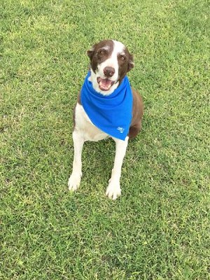 Cooling Bandanas - For Humans and Canines